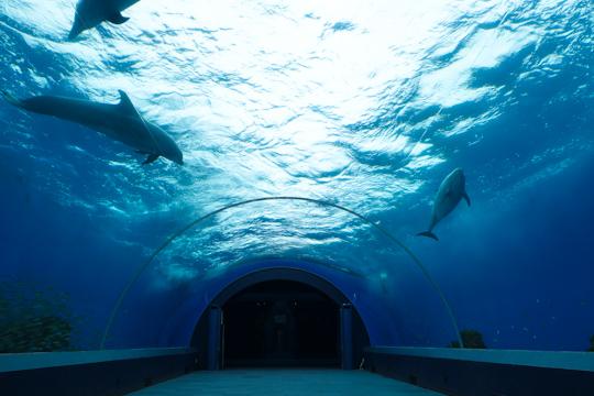 イルカ水槽