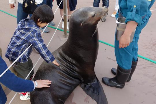 イルカと握手できなかったのが余程悔しいのか、息子は何度もアシカを触っていました。