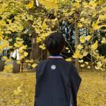 銀杏の木と息子